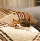 Cue cat sleeping on blanket Royalty Free Stock Photos