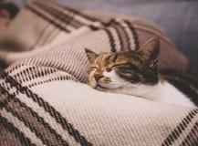 Cue cat sleeping on blanket Stock Photo