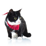 Side view of a cute cat standing Royalty Free Stock Photography