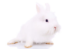 Side view of a cute little white bunny Royalty Free Stock Photography