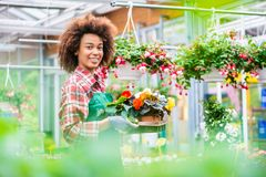 Side view of a dedicated florist holding a tray with decorative potted flowers. While working in a modern flower shop with various houseplants for sale Stock Images