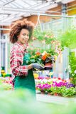 Side view of a dedicated florist holding a tray with decorative potted flowers. While working in a modern flower shop with various houseplants for sale Royalty Free Stock Photos