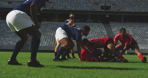 Rugby players playing rugby match in stadium 4k. Side view of diverse rugby players playing rugby match in stadium. They are tackling each other other 4k stock video