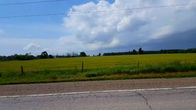 Side view driving by rural field in day. Driver point of view pov driving past countryside scene. Side view driving by rural field in day. Driver point of view stock video footage