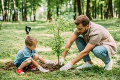 Side view of father and son planting tree. At park stock photo