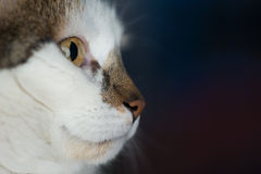 Side view of female cat head with copy space Stock Images