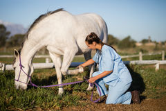 Side view of female vet examining horse foot. While kneeling on field in paddock Royalty Free Stock Photo