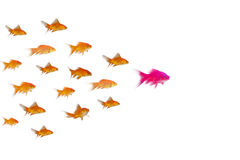 Side view of fish swimming. Against white background Stock Photo