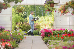 Side view of gardener carrying crate with flower pots while walking outside greenhouse Stock Image