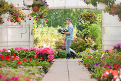 Side view of gardener carrying crate with flower pots while walking outside greenhouse Stock Photos