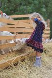 Side view of goats biting kids dress. At farm stock image