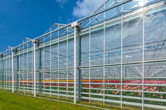 Side view of a greenhouse with flowers inside Stock Images