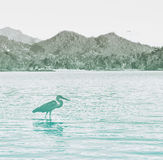 Side View of Grey Heron Wading in Water. At Port Launay Marine Park, Seychelles Stock Image