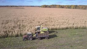Side view harvester with tractor and lorry gather corn mass. Inspiring aerial view harvester and tractor with trailer gather corn mass on rich boundless corn stock video
