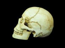 Side view of human skull on isolated black background Royalty Free Stock Photos