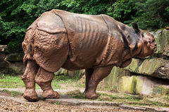 Side view of Indian rhinoceros (Rhinoceros unicornis) Stock Photo
