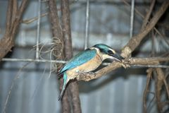 A side view of a kingfisher. This is a side view of a kingfisher eating royalty free stock photography