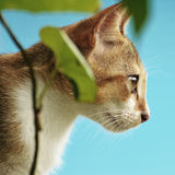 SIDE VIEW OF LOVELY CAT EYE Royalty Free Stock Images