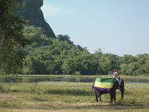Side View Of Man Riding On Elephant. Side view of a young man riding on elephant by the lake Royalty Free Stock Image