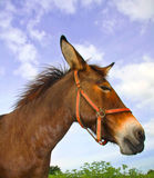 Side view of mule Royalty Free Stock Image