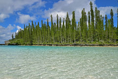Side view of Natural Pool with row of tall pine trees and shallow turquoise clear water Stock Photos