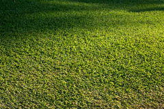 Side view of newly mown grass lawn Stock Photo