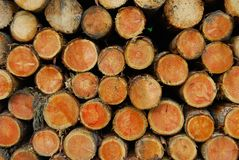 Side View Of Pile Or Stack Of Small Logs Royalty Free Stock Image