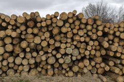 Side View Of Pile Or Stack Of Wood Logs In Plana Mountain Stock Image