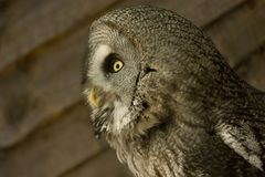 Side view of owl Stock Photo