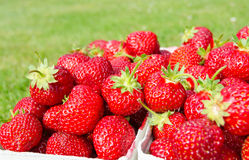 Side view for packages with fresh strawberries with grass background Royalty Free Stock Photography