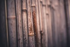 Side view photo from a natural bamboo wall. royalty free stock images