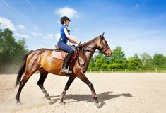 Bay horse and horsewoman riding at racetrack. Side view portrait of beautiful bay horse and female equestrian riding at racetrack during competition Stock Photos