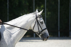 Side view portrait of a beautiful show jumping horse during work Stock Photo