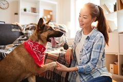 Big Dog Giving Paw stock image