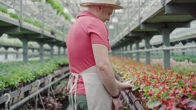 Side view of positive mid-adult man admiring red flowers in greenhouse. Portrait of confident handsome biologist in