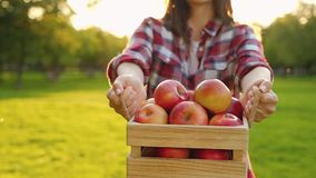 Side view of a positive young woman holding a wooden crate with juicy red apples stock footage