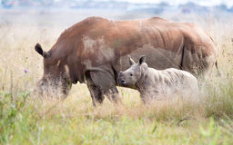 Side view Rhino and calf Stock Photo