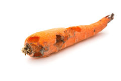 Side view rotten carrot bited by insect on white background Stock Photo