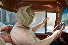 Shirtless man wearing weird cat mask while driving. Side view of a shirtless overweight man wearing a weird and funny cat mask while driving a car Stock Photos