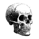 Side view of skull. Hand drawing of skull by pencil . use for Halloween day Stock Photo