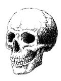 Side view of skull. Hand drawing of skull by pencil . use for Halloween day Stock Photos
