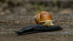 Side view of slug, nature Royalty Free Stock Images