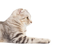 Side view  smiling cat Royalty Free Stock Photo