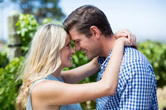 Side view of smiling young couple embracing at vineyard Stock Images