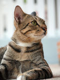 Side view of tabby cat staring to something Stock Photos