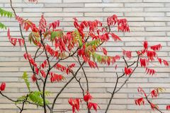 Side view of tree in front of white brick wall stock photos