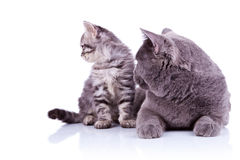 Side view of two cats Royalty Free Stock Photography