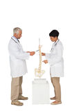 Side view of two doctors pointing at skeleton model Royalty Free Stock Photo