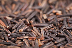 Side view of wild rice. Forming a background Stock Photography