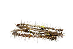 Side View Woven Thorny Branches Depicting Crown Of Thorns Stock Images